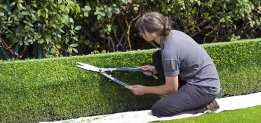 Bolsa de empleo diputación de granada categoría jardineria