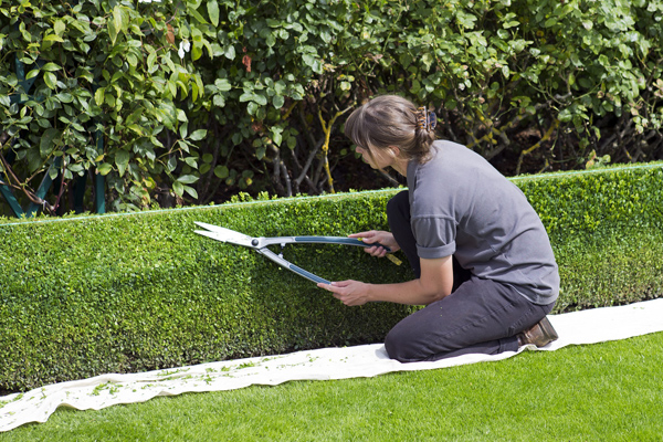 Abierta bolsa de trabajo para jardineros en granada - Trabajo de jardinero en madrid ...